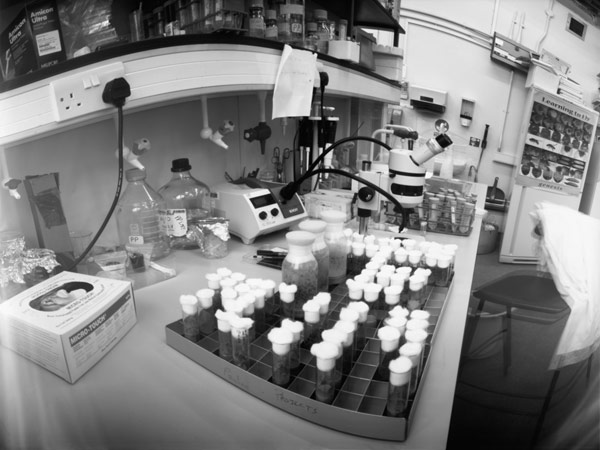 Drosophila Laboratory